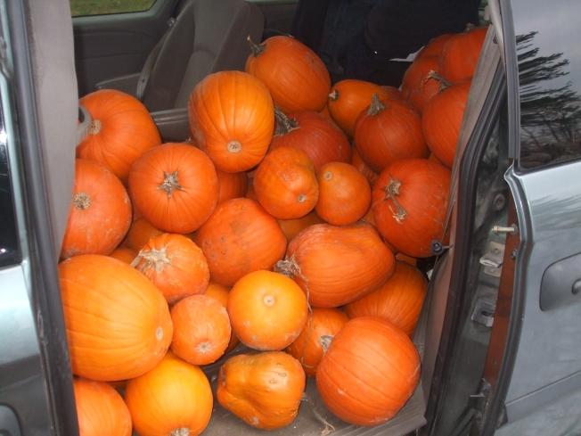Pumpkins-van.JPG