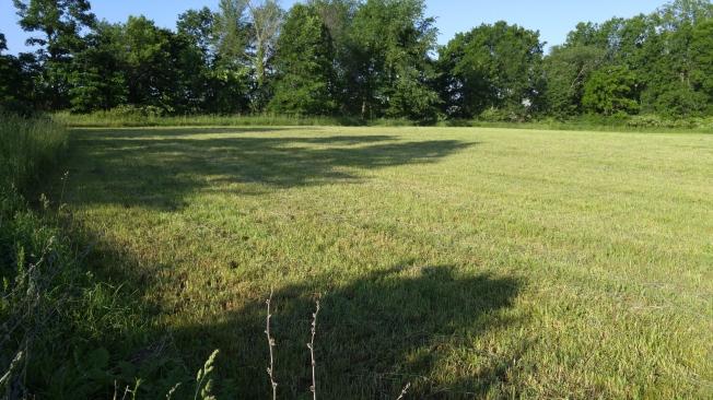 Clean field