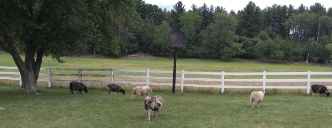 flock back yard.jpg