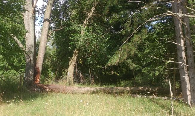 Tree in Pasture.jpg